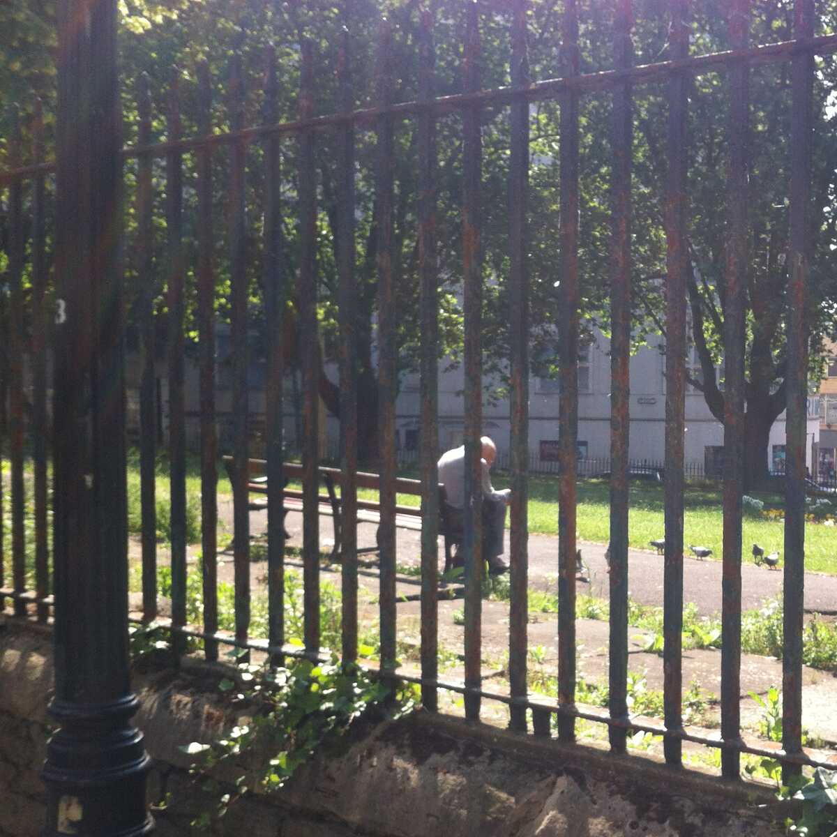 Looking through the bars of a park boundary at a man feeding pigeons